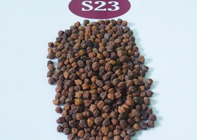 Black Chick Peas
